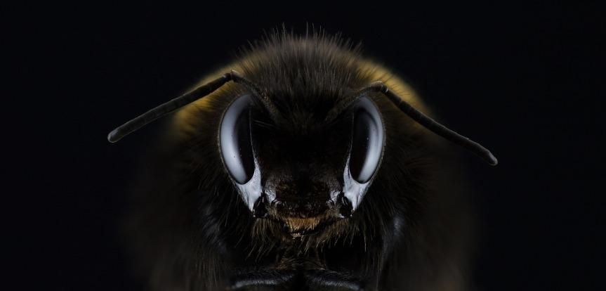 μέλι: 7 πράγματα που δεν ξέρατε ότι μπορεί νακάνει!!!